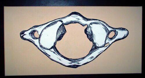 Chiropractic Art Atlas Vertebra