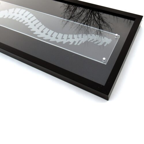 Closeup of spine shadowbox corner