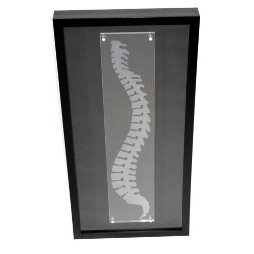 Chiropractic Spine Shadowbox art, spine art, Chiropractic wall art