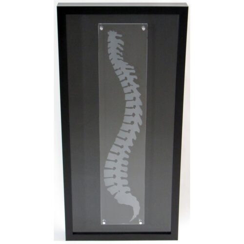 Chiropractic wall art spine shadowbox