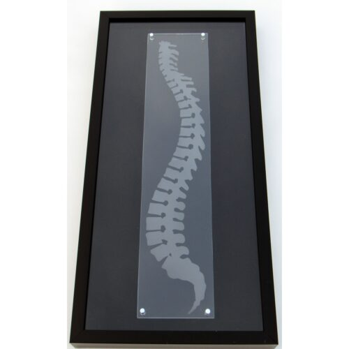 Chiropractic spine wall art shadowbox