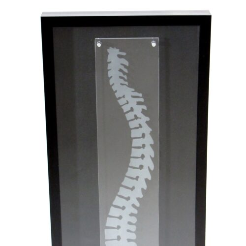 Chiropractic shadowbox framed wall art